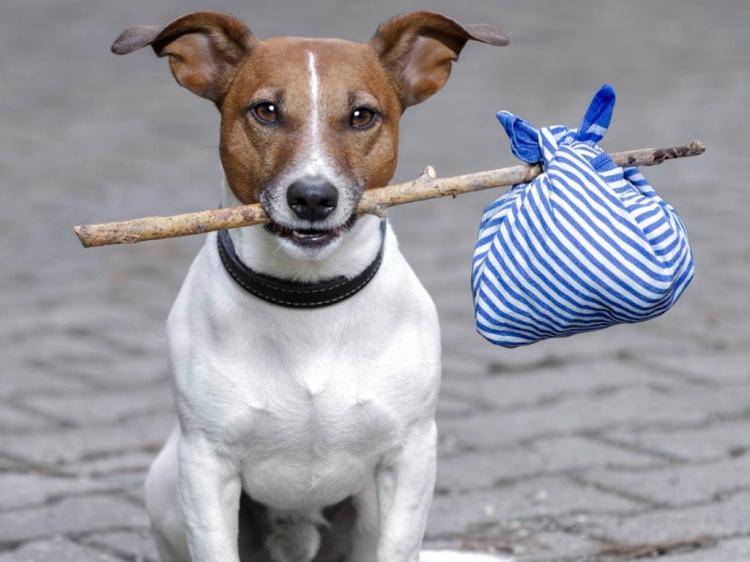 Aplicación para reportar Mascotas extraviadas en New York